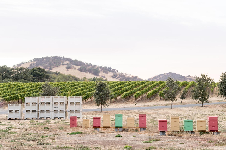 Kistler Vineyards Hudson Vineyard bee boxes