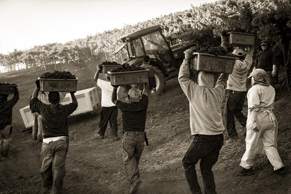 Chev Harvest