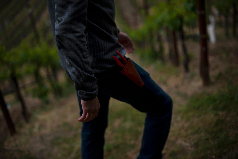 Vineyard worker in vineyard