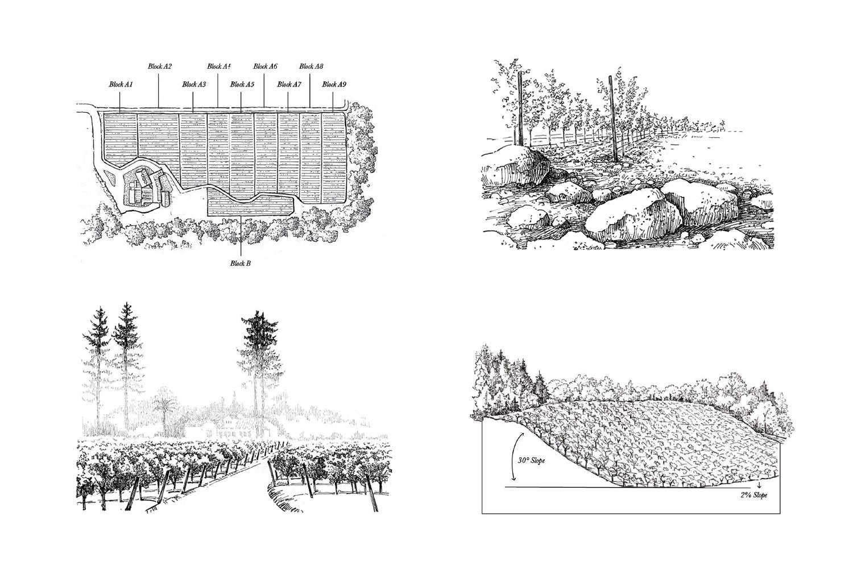 Paul Hobbs vineyard illustrations